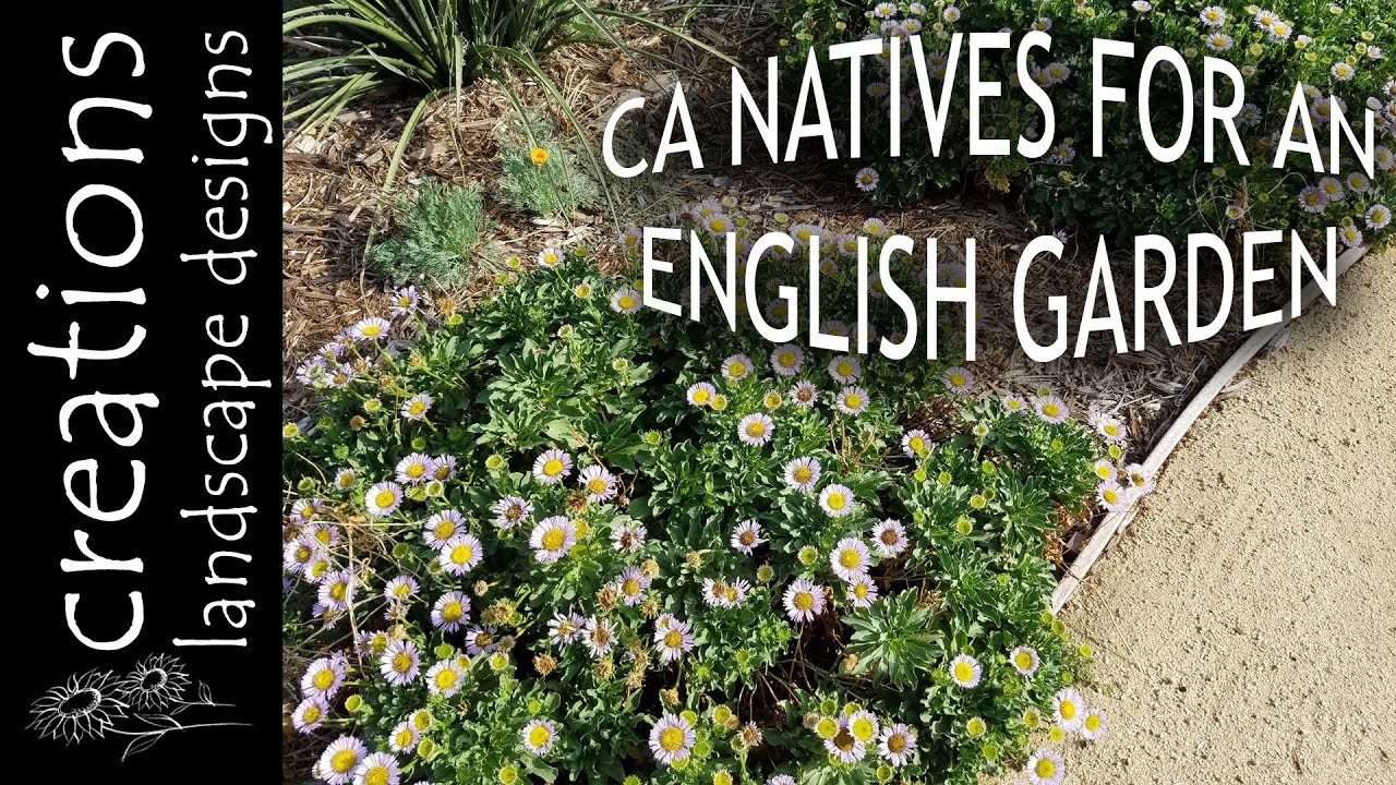Top 3 California Native Plants For An English Cottage Garden. Creations  Landscape Designs