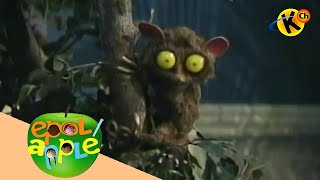 Epol Apple | Pancho the Tarsier (song) | Grade 1 to 3 English