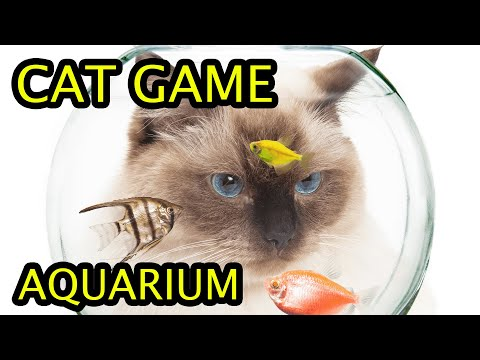 Aquarium videos for cats to watch