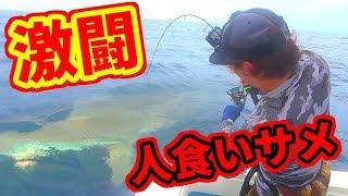 【衝撃】100キロ級の人食いサメと大激闘!!【水中映像】 thumbnail