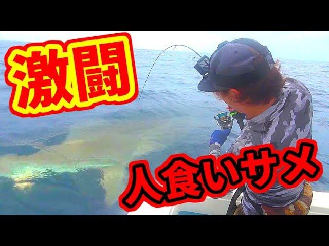 【急上昇】【衝撃】100キロ級の人食いサメと大激闘!!【水中映像】【釣りよかでしょう。】