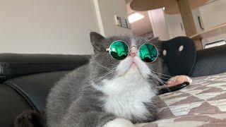 고양이가 선글라스를 쓰…