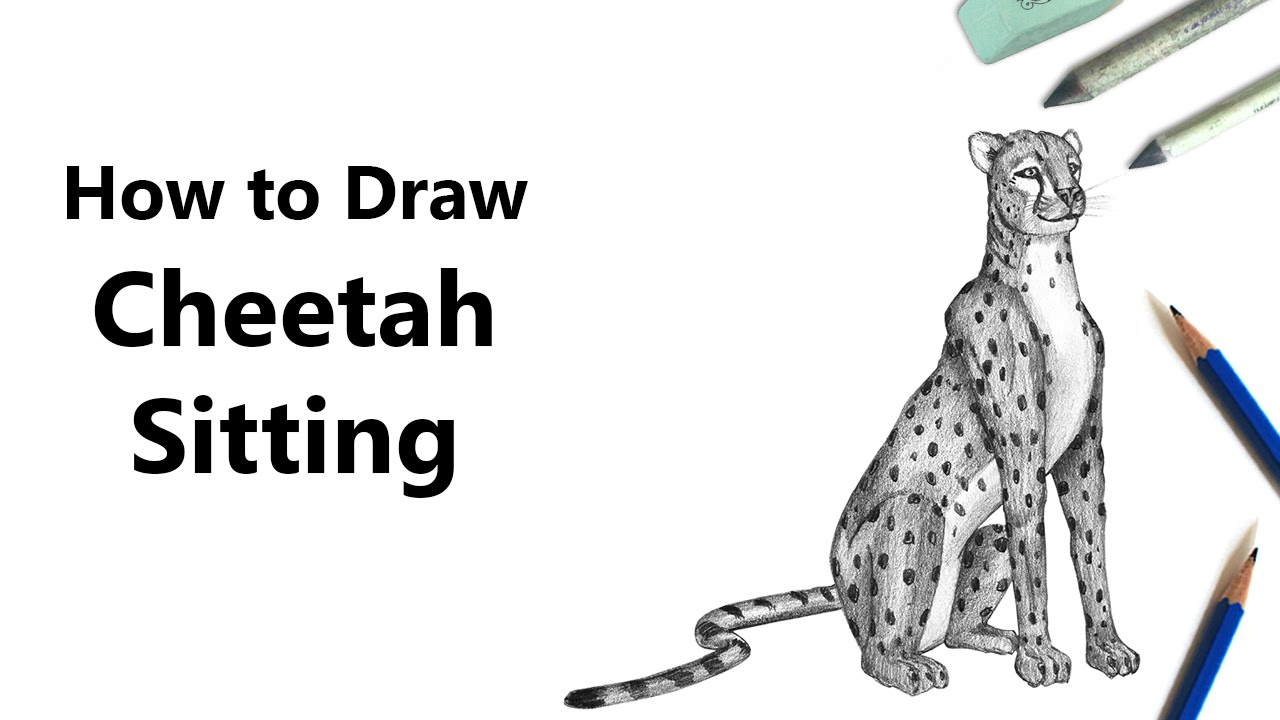 how to draw a cheetah sitting with pencils time lapse youtube