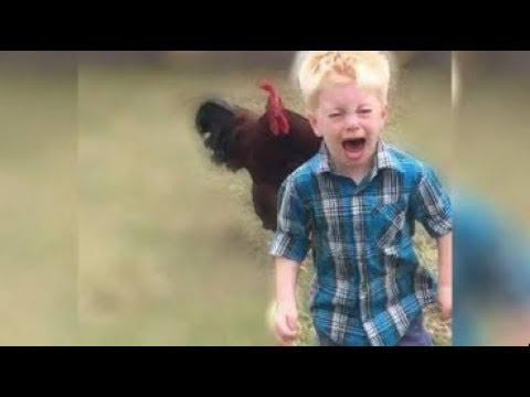 Rooster vs kids | Roosters chasing kids collection videos