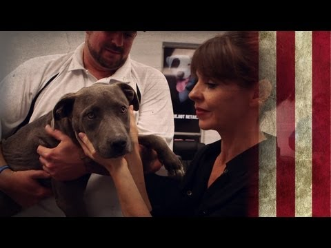 Detroit Dog Rescue | American Dog With Victoria Stilwell