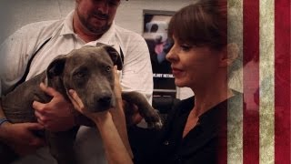 Detroit Dog Rescue   American Dog With Victoria Stilwell
