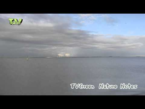 Nature Notes from the Wadden Sea #07
