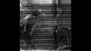 Moonlite Bunny Ranch - Black Cotton Fields