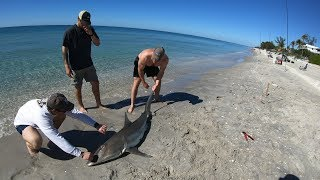 Brigand Outdoors - EPIC Land Based Shark Fishing in Englewood, FL