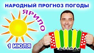 Народный прогноз погоды   День палящего Солнца   1 июля. Юмор