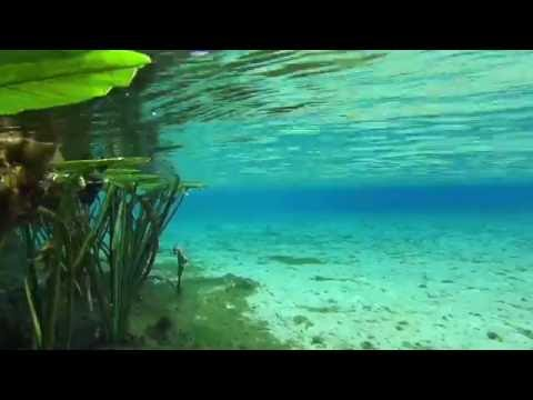 Top 5 Crystal Clear Florida Springs