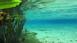 Top 5 Crystal Clear Florida Springs