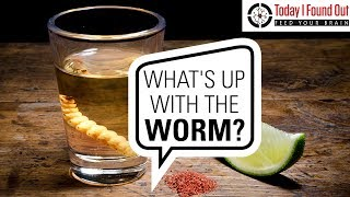 Who Invented Tequila and What's the Deal with the Worm?
