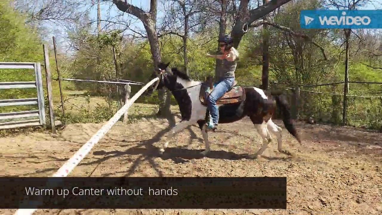 Intermediate level horse riding lessons Western riding - patterns, hands free, transitions Osmo