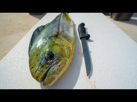 Deep Sea Fish Sandwich -Catch Clean Cook (Mahi Mahi, Dolphin, Dorado)