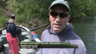 Willamette River & Wind River Spring Chinook