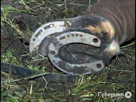 В хабаровском парке от удара током погиб конь.MestoproTV