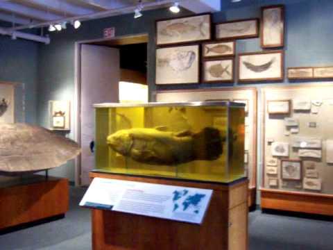 harvard museum of natural history giant dino