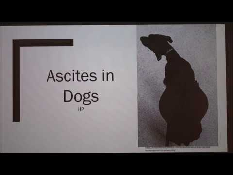 ascites-in-dogs