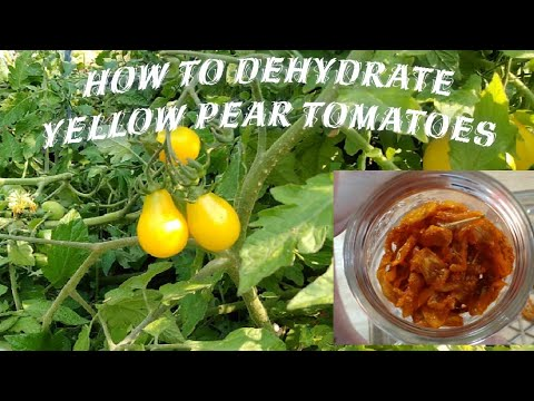 How To Dehydrate Yellow Pear Tomatoes.