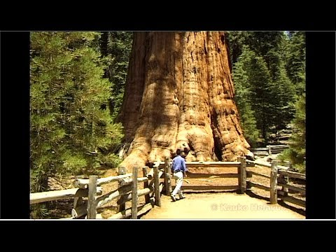 Sequoia National Park / The GENERAL SHERMAN TREE  (HD)