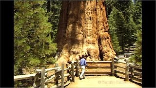 (Full HD)  The GENERAL SHERMAN TREE (Sequoia National Park) 1997
