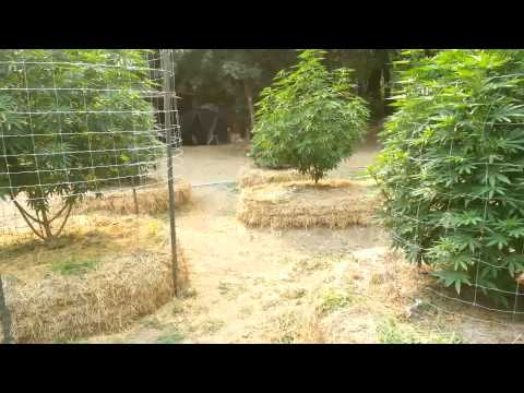 "Epic southern oregon marijuana garden ""Must see!"""