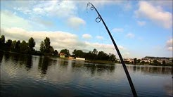 depart live silure catfish cournon auvergne cts 63