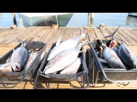 Venice Yellowfin Tuna Fishing 2/22/15 With Mexican Gulf Fishing Company