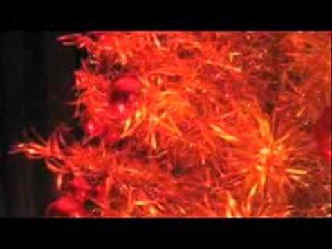 The Ultimate Aluminum Christmas Tree Tribute Movie