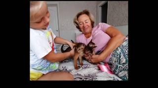 Абиссинские котики.Фото слайд-шоу 27.09.2017