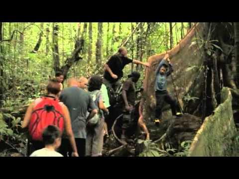 En tur i regnskoven