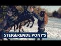 VLOG ► Met twee pony's tegelijk steigeren in de wei