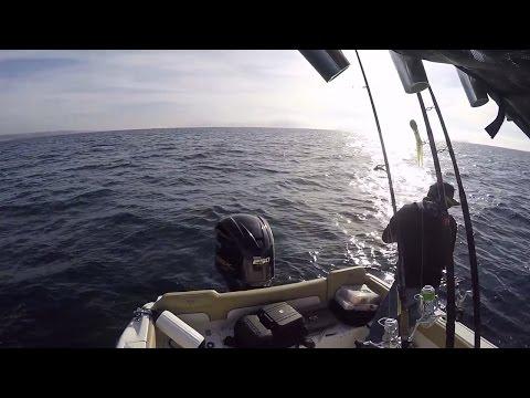 sdfish hookup baits
