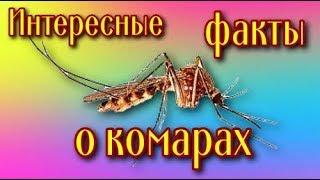 Что Вы знаете о комарах? Чем пищит комар?