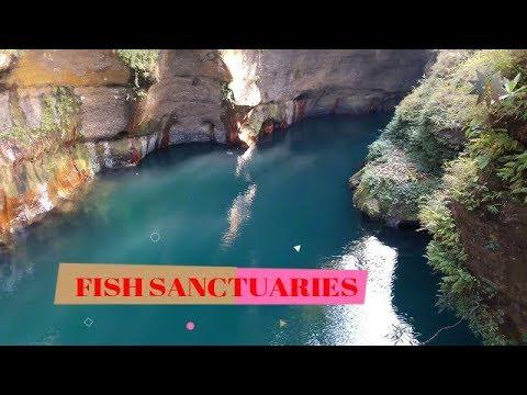 FISH SANCTUARIES SOUTH GARO HILLS DISTRICT MEGHALAYA