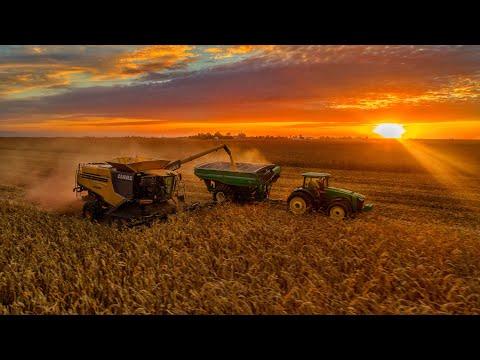 Harvest 2017   Poynter Family Farms