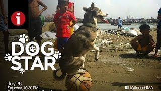 "I-Witness: ""Dog Star"", a documentary by Howie Severino (full episode)"