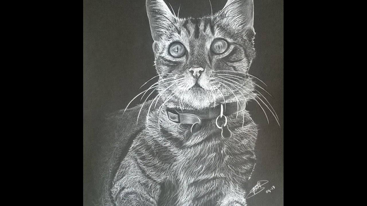Dessiner un chat en noir et blanc crayon prismacolor youtube - Chat noir dessin ...