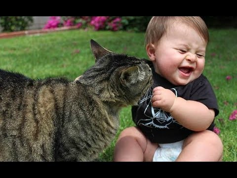 Funny Babies Laughing Excitedly at Cats Compilation |  BABY AND PET