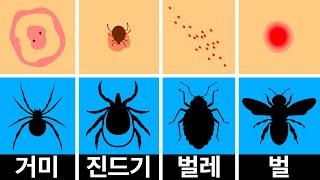 벌레 물린 자국을 구분하고 대처하는 법