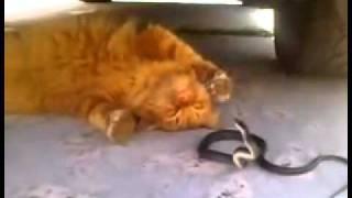 Angry Snake vs Garfield