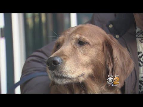 Internet-Famous 'Hugging Dog,' Owner Left Homeless By Fire