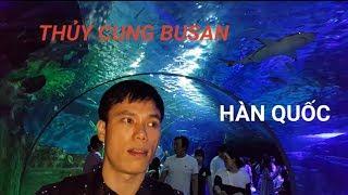 [Vlog01] Khám phá thủy cung Busan Hàn Quốc-Korea Channel