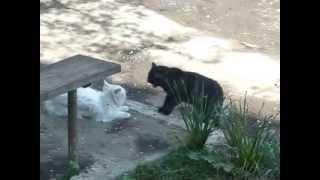 Чёрный кот и белая кошка - серьезный разговор (Black and White cats takling)