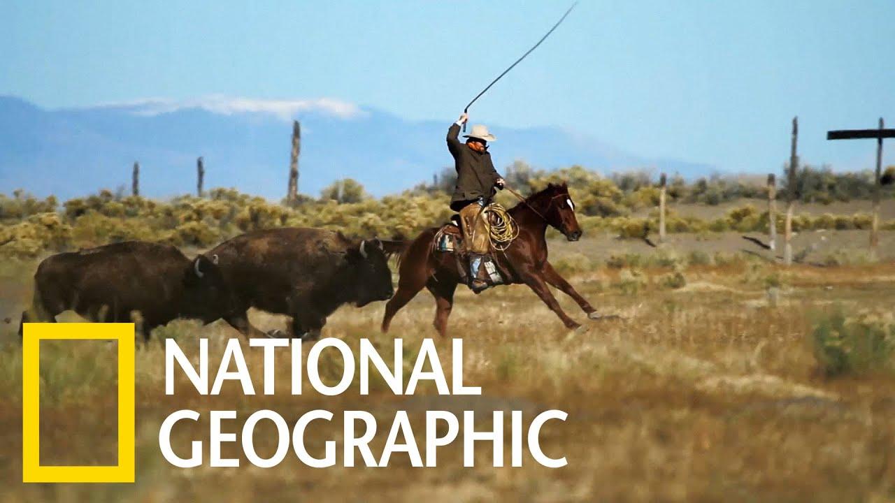 守護野牛群的現代牛仔《國家地理》雜誌