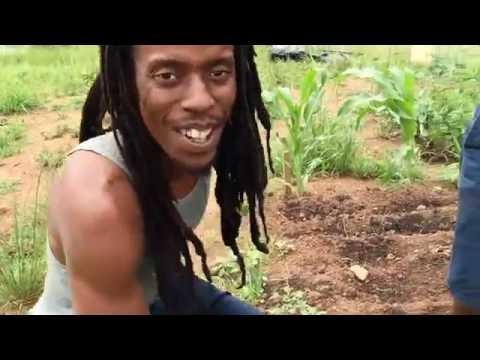 Ras Haitrm visits Organic Farmer in Swaziland