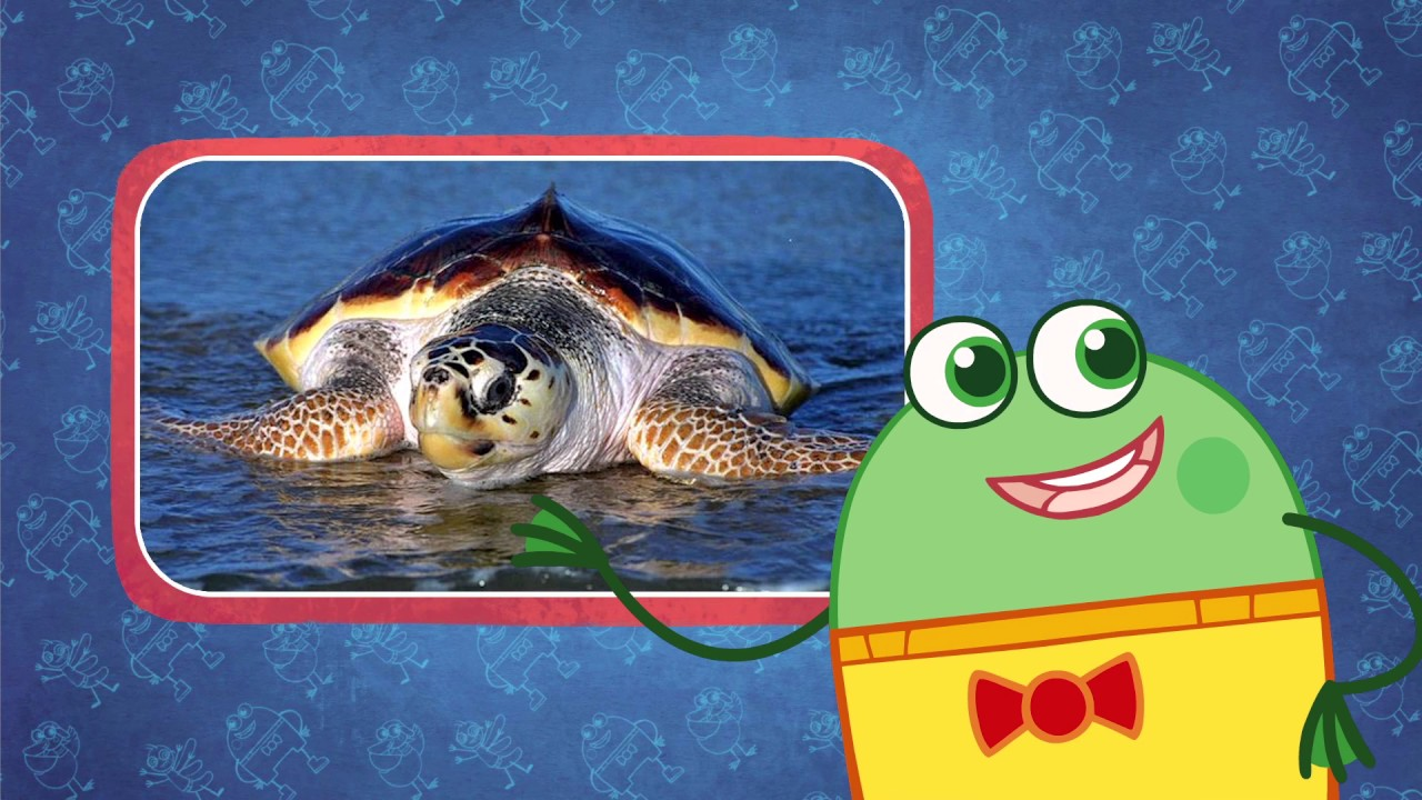 10 things about the Great Barrier Reef - Fun facts for kids - YouTube