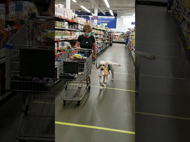 Help with Shopping   Aspen Service Dogs