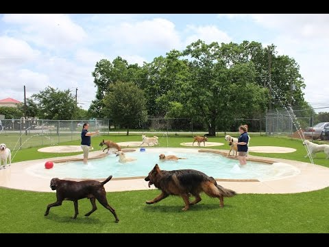 Dog Training Bay City Tx